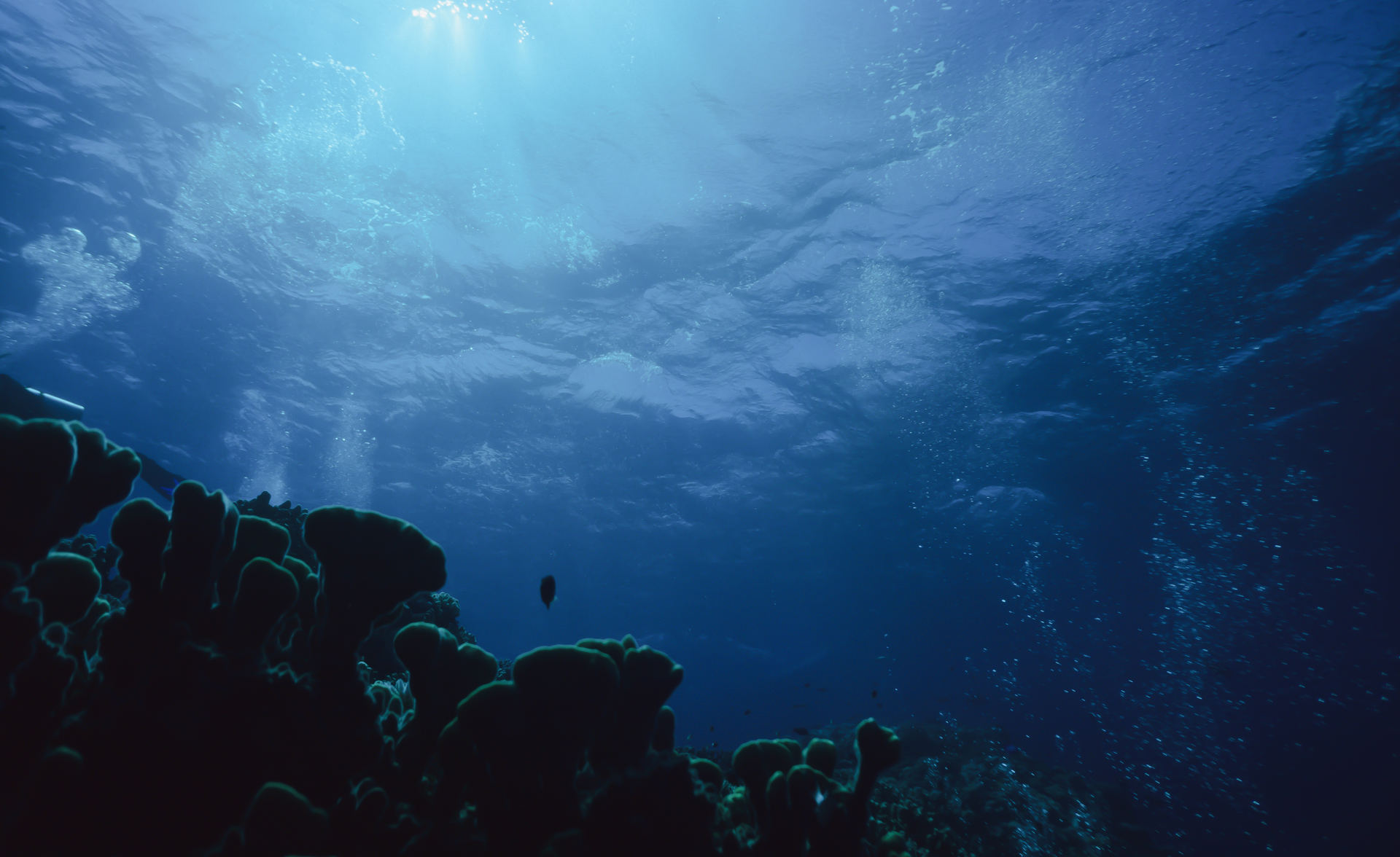 """""""Cabo Verde Ocean Week"""", uma semana para transformar o país num centro da Economia Azul"""