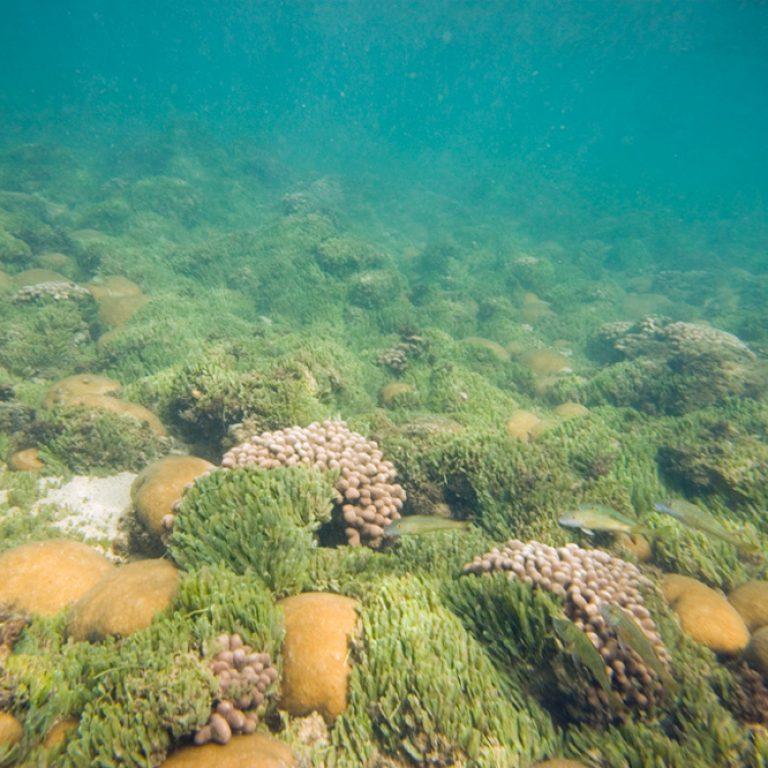 Fonds marins de coraux ˆ Baia das gatas, Boavista